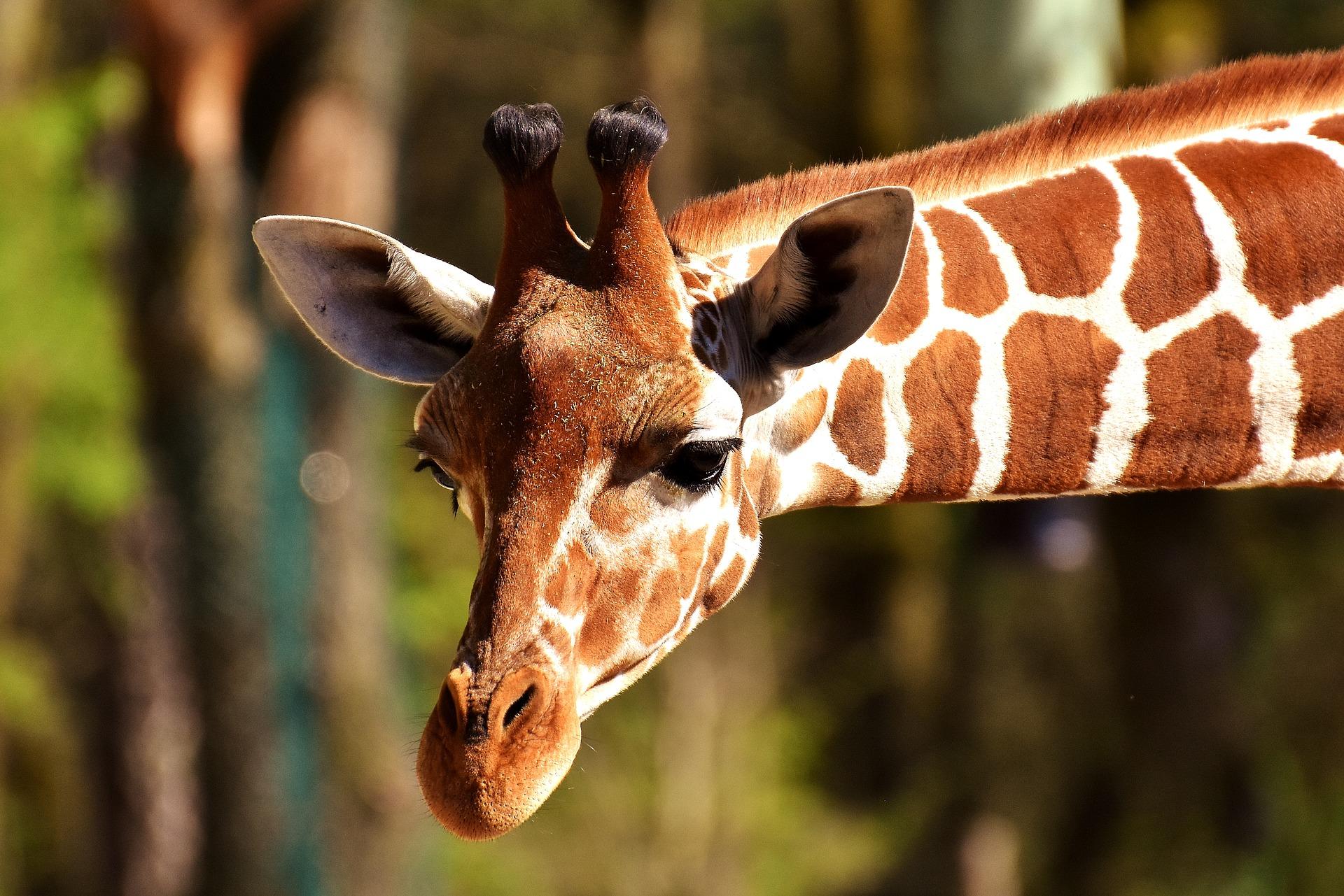 Curiosidades surpreendente sobre os animais