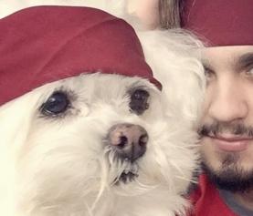 Luan Santana desabafa após acidente de cachorro