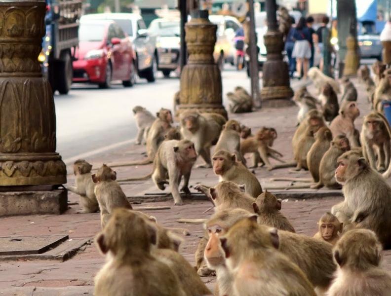 Cidade dos macacos!